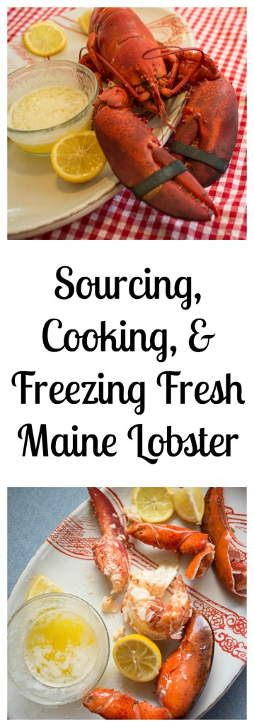 Lobster collage-1